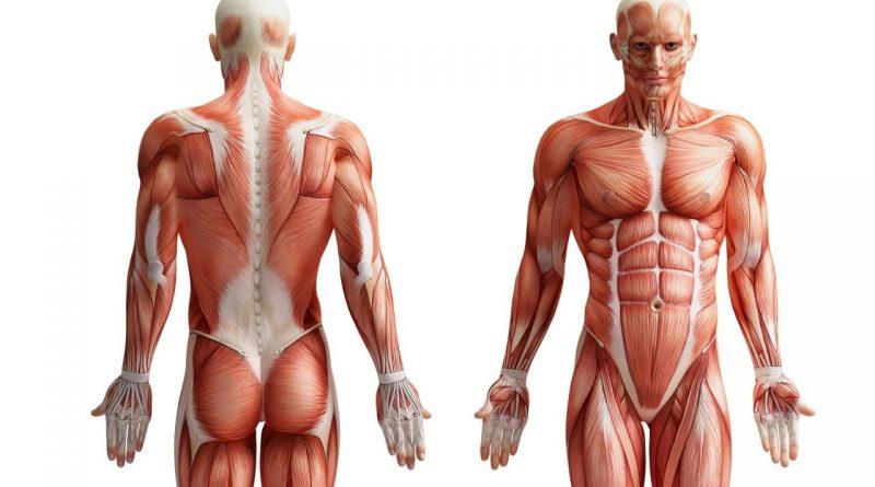 anatomy trivia