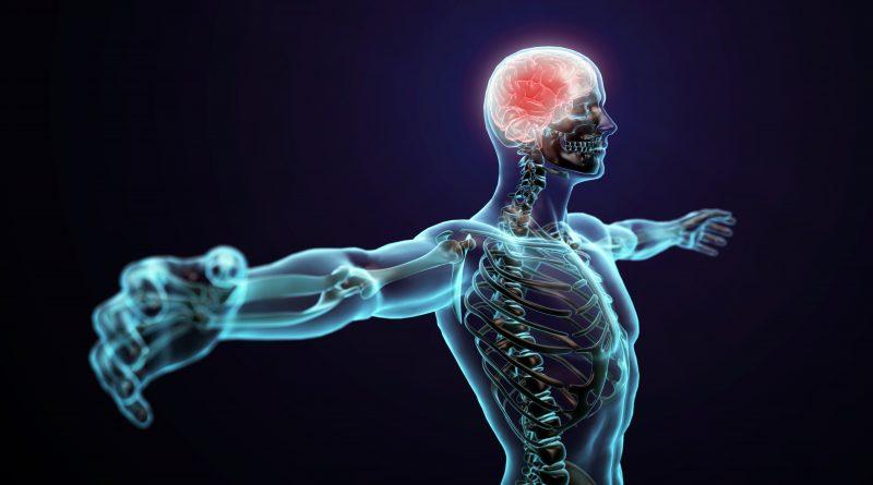 human body trivia